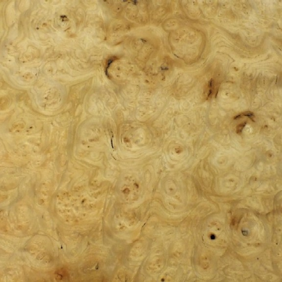 Carpath Burl Elm